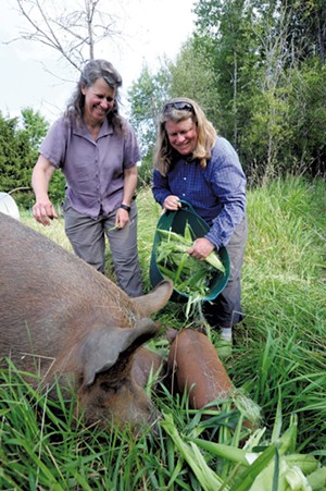 Laura Olsen (left) and Mari Omland feeding Amelia Bedelia, a 600-pound sow, at their Green Mountain Girls Farm - JEB WALLACE-BRODEUR