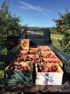 COURTESY OF SHELBURNE ORCHARDS