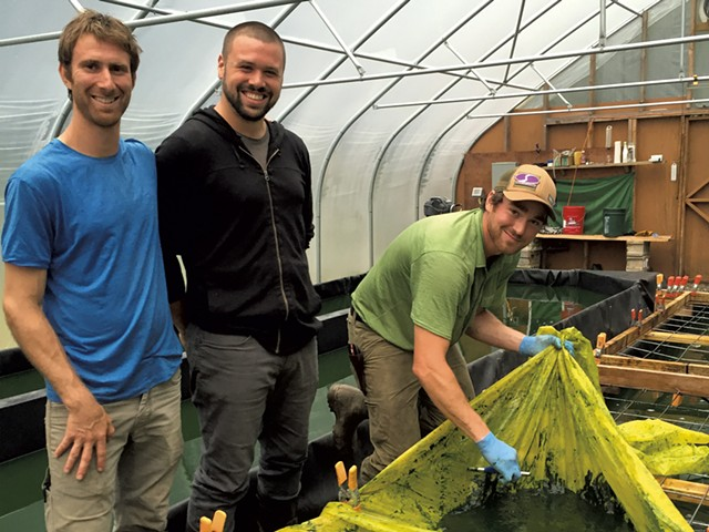 Left to right: Greg Soll, Christopher Miller and Aaron DellaCroce of Northern Spirulina - SALLY POLLAK