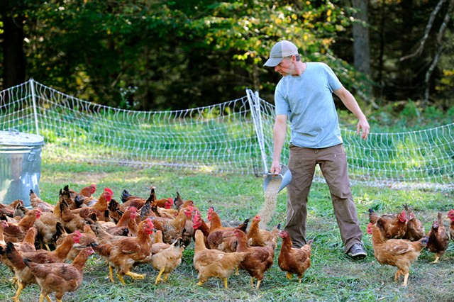Craig Oshkello feeding chickens - JEB WALLACE-BRODEUR