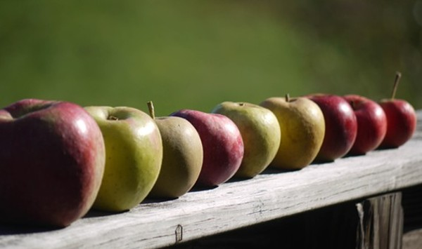 Applesauce and Vinegar Company in Central Vermont Trims Its Workforce