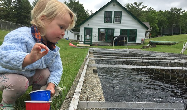Fee Hike Could Spawn Revenue to Save Salisbury Fish Hatchery