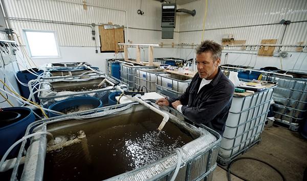 Sweet Sound Aquaculture Puts Shrimp on the Locavore Menu