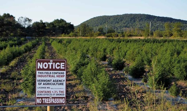 The Cannabis Catch-Up: Has Vermont's Hemp Bubble Popped?