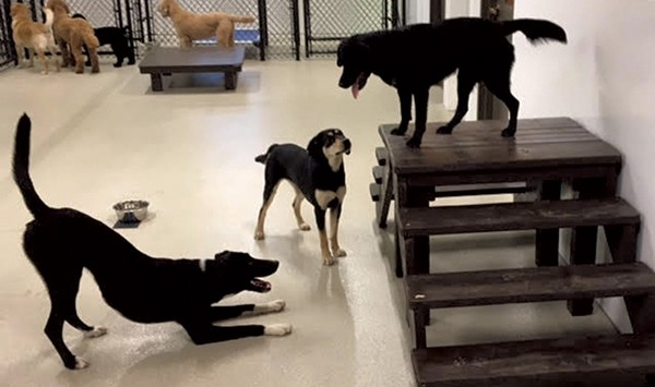 Play and Pampering at Happy Tails Pet Resort