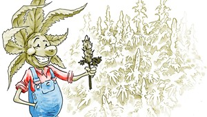 The Cannabis Catch-Up: Would Small Vermont Growers Get a Chance in a Regulated Market?