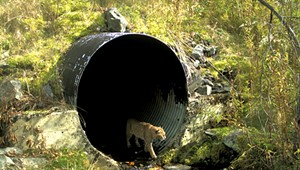 Where the Wild Things Cross: Do Highway Tunnels Reduce Roadkill?