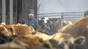 Vermont's Last Dairy Farmer-Lawmaker Is Selling His Cows