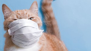 Readers: Tell Us About Your Pandemic Pets