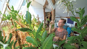 The Vermont Center for Integrative Herbalism Finds New Home at Goddard College