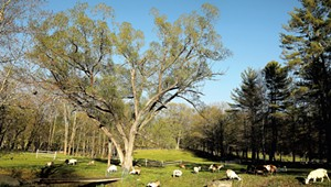 Stay in Style, Goat-Adjacent, at Townshend's Big Picture Farm