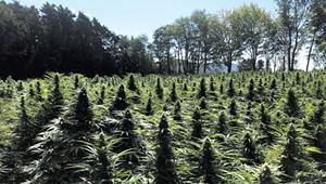 A Veteran Cultivator Explains How to Grow Cannabis Yourself