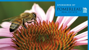 Planning a Garden? Think Pollinators, Not Just Pretty Flowers
