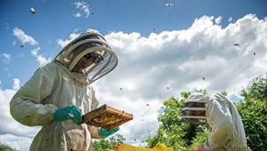 WTF: Why Do Honeybees Swarm?