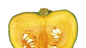 Recipes to Make the Most of Vermont's Squash Harvest