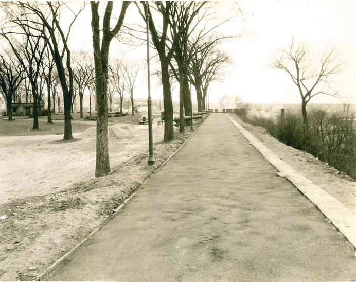 Photos: Burlington's Trees Through the Ages