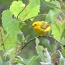 Rutland County Audubon & Slate Valley Trails Bird-Watching Walk