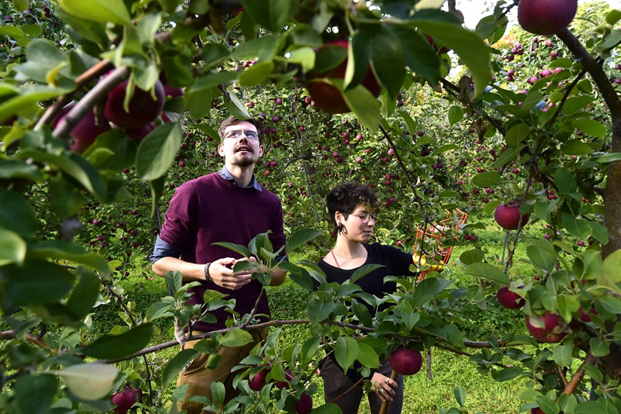 Burtt's Apple Orchard - JEB WALLACE-BRODEUR