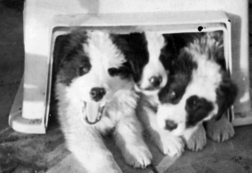 The puppies - COURTESY OF MARK DE PIERRO