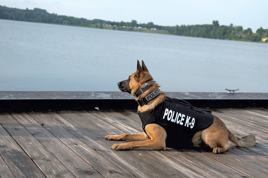 K-9 Ozzy - COURTESY OF NEWPORT POLICE DEPARTMENT