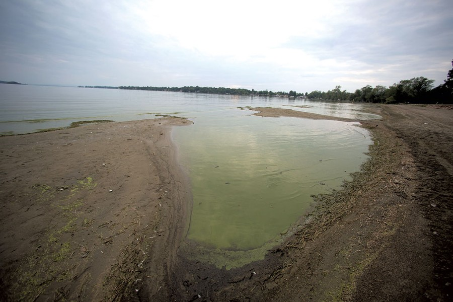 Blue-green algae in St. Albans Bay - JAMES BUCK
