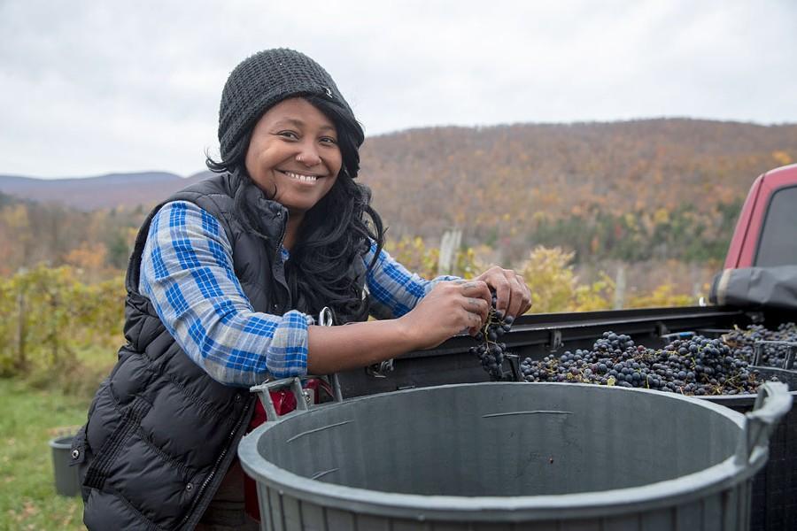 Krista Scruggs harvesting grapes in Huntington for her ZAFA Wines - JAMES BUCK