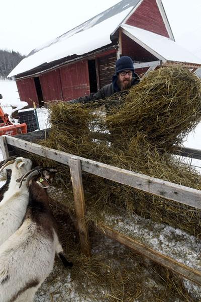 Joey Nagy feeding his Kiko goats - JEB WALLACE-BRODEUR
