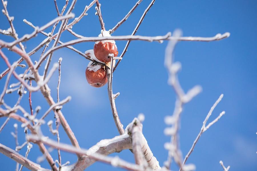 Yates Family Orchard - LUKE AWTRY