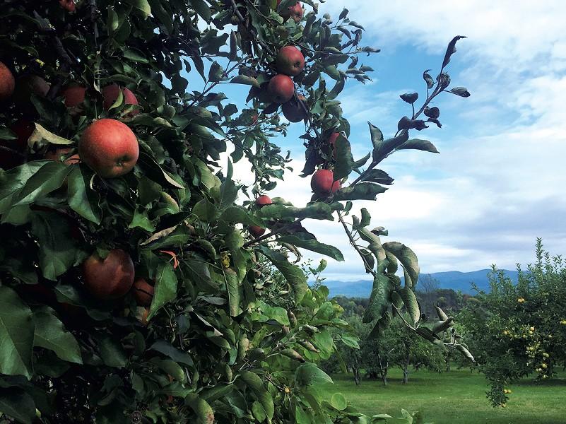 Windfall Orchard - JORDAN BARRY ©️ SEVEN DAYS