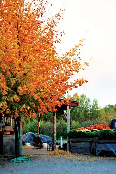 Shelburne Orchards - CHARLOTTE SCOTT