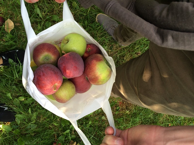 A half-peck of apples at Happy Valley Orchard - JULIA CLANCY