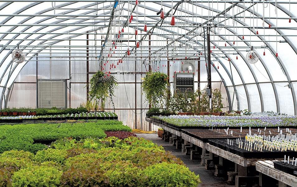 Greenhouse at Red Wagon Plants - HANNAH PALMER EGAN