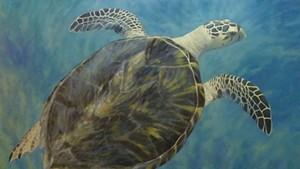"""Hawksbill Sea Turtle"" by Susan Parmenter"