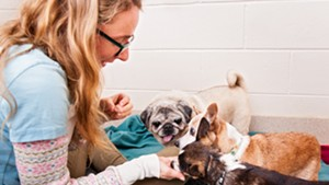 A volunteer treats Fat Jack, Trouble and Buddy to a treat at the Humane Society of Chittenden County