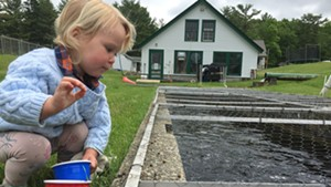 A child feeding the fish at the hatchery