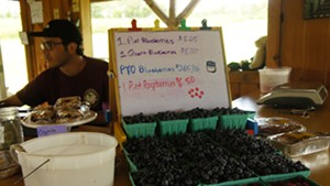 Berries for sale at Charlotte Berry Farm