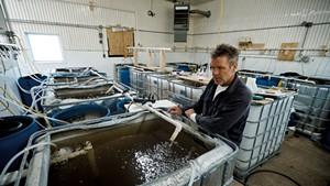 John Brawley with his shrimp nursery tanks