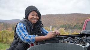 Krista Scruggs harvesting grapes in Huntington for her ZAFA Wines