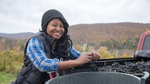 Krista Scruggs harvesting grapes in Huntington for her ZAFA Wines