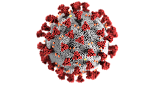 A model of a coronavirus like the one that causes COVID-19