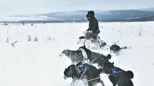 Bathsheba Demuth with sled dogs