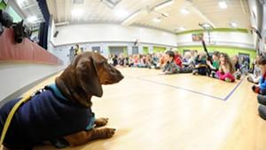 Hobbes at East Montpelier Elementary School