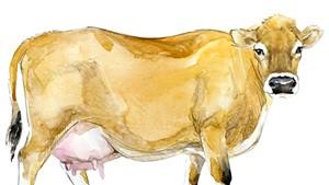 Raw Milk Purveyor Henry's Dairy Is Closing
