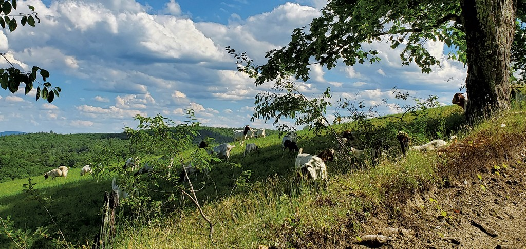Morse Brook Farm - COURTESY OF OPEN FARM WEEK