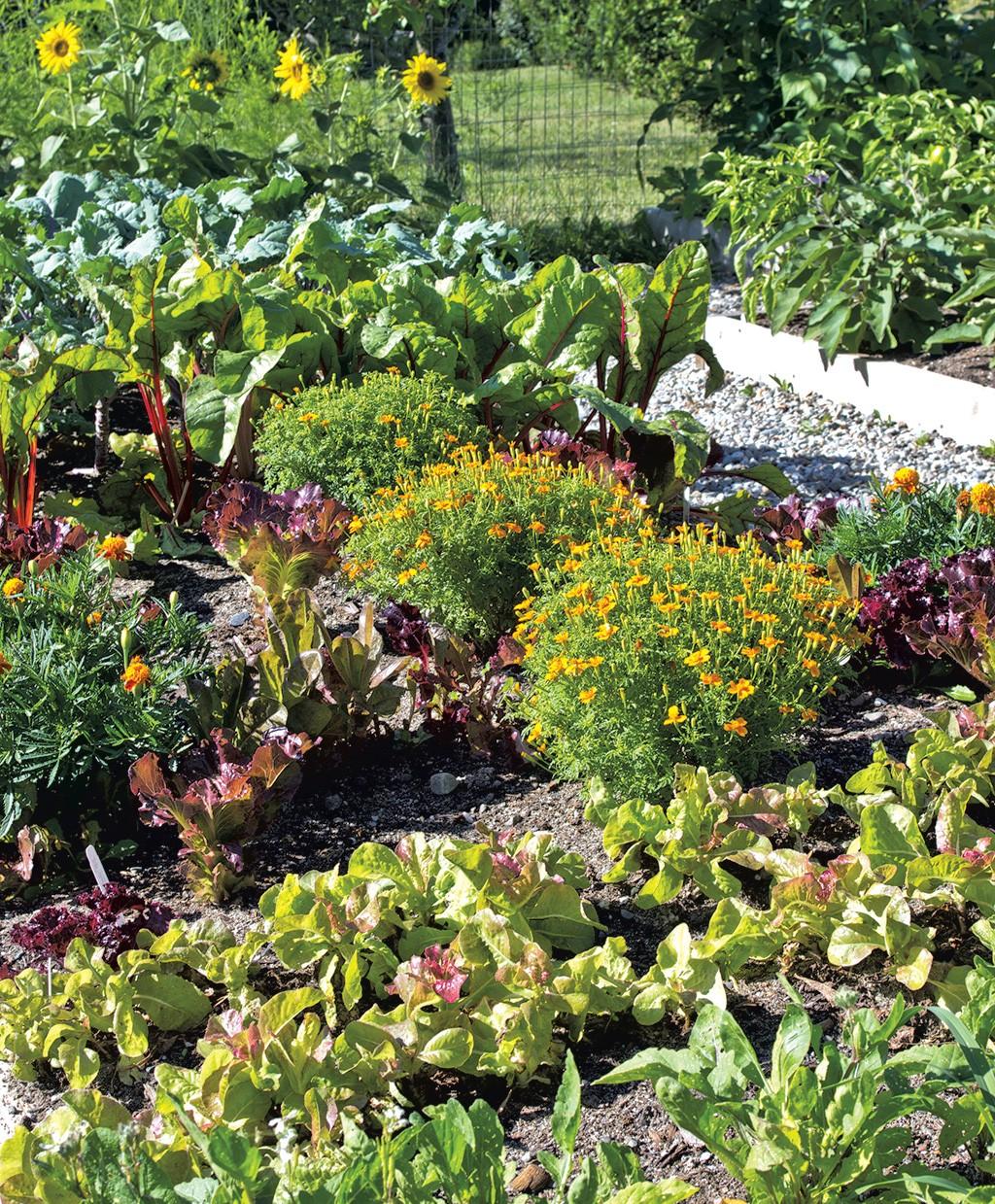 Jardines de flores de patio trasero - Ideas de decoración de la casa