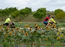 Farm to Fork Fondo Champlain Islands