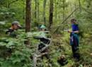 Vermont's Ash Trees & the Emerald Ash Borer