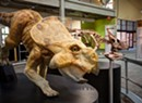 Dinos and Disasters: Fairbanks Museum Explores Extinction