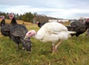 Tangletown Farm Prepares 'Happy Gobblers' for the Holiday