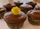 Home on the Range: Magical Cocoabean Cupcakes